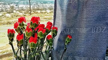 БДЖ подкрепя инициатива за раздаване на цветя в теснолинейката